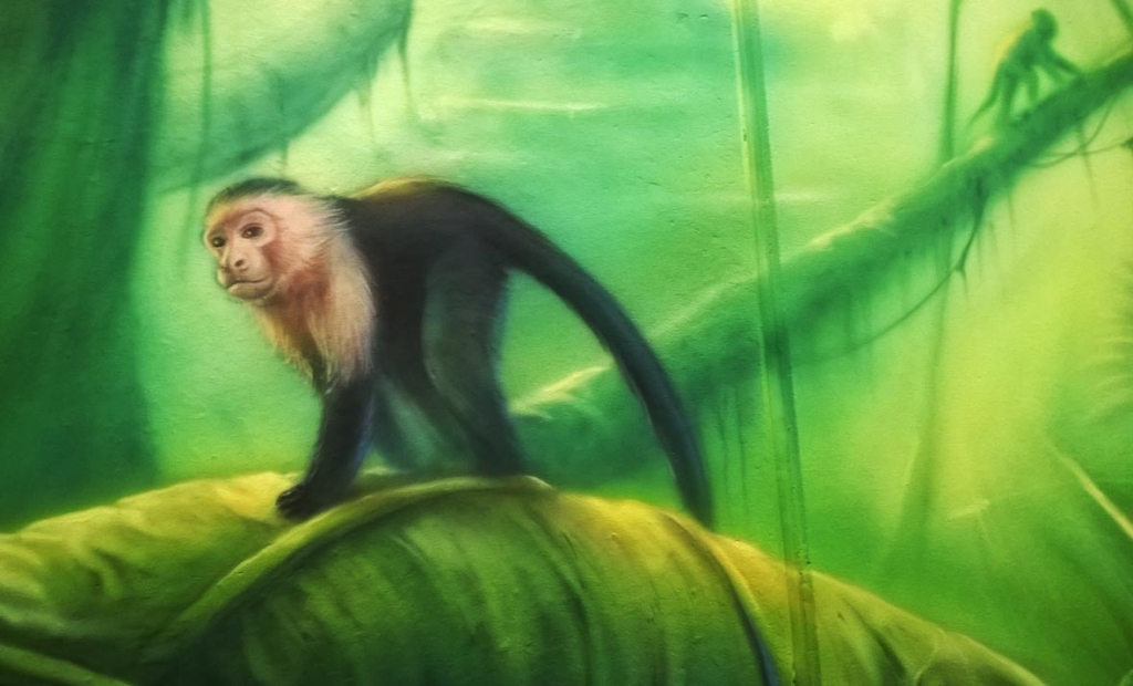 małpka kapucynek, malowidło